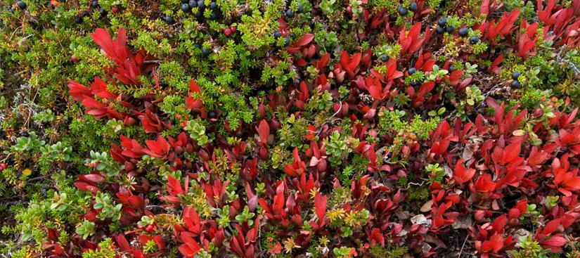 Foto © Terje Rakke/Nordic Life AS - Visitnorway.com