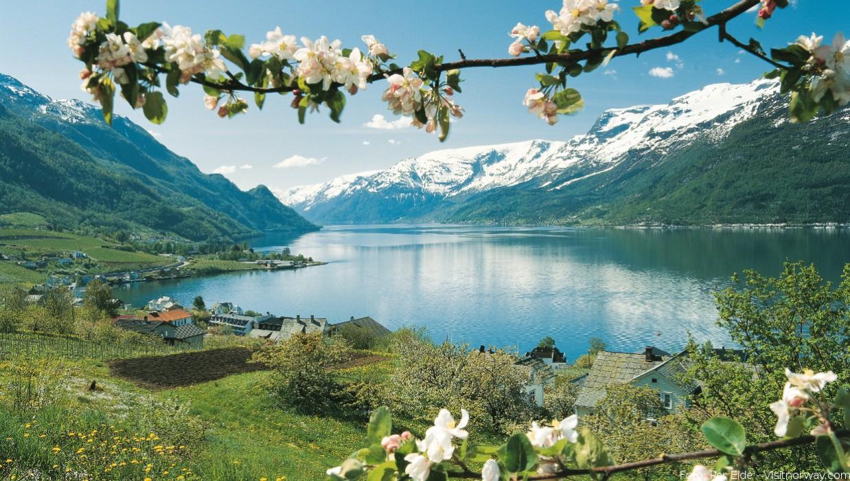 apfelbluete_am_hardangerfjord_4025067708